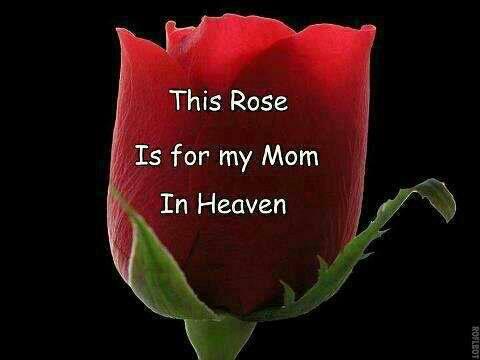 RoseForMominHeaven