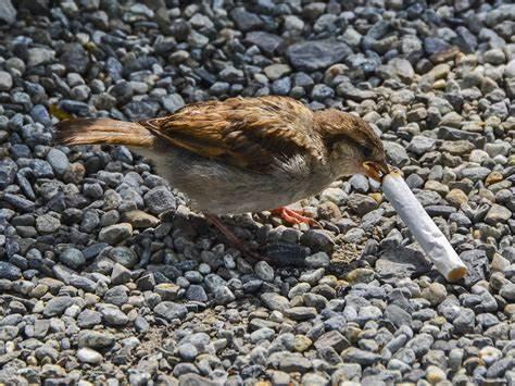 BirdSmokeing